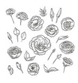 hand drawn elegant lisianthus vector image vector image