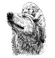 Labrador Retriever 19 vector image