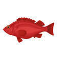 red fish icon exotic fresh raw seafood symbol vector image vector image