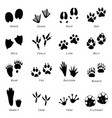 animal spoor footprints icon vector image