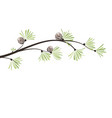 branches pine vector image vector image
