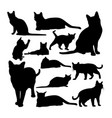 korat cat animal silhouettes vector image vector image