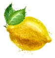 lemon logo design template food or fruit vector image vector image
