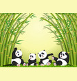 panda action playing together under the bamboo vector image