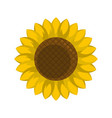 round sunflower icon flat style vector image vector image