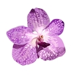 Violet orchid isolate pattern on white vector image
