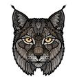 Wildcat lynx mascot isolated head vector image