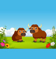two big brown bison playing in the green field vector image