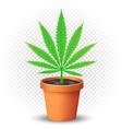 hemp grows in flowerpot vector image
