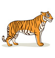 cartoon cute tiger vector image