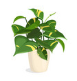 golden pothos plant vector image vector image