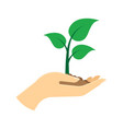 green sprout in hand vector image vector image
