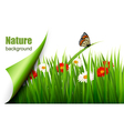 spring background with flowers grass