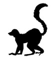 tropical animal lemur vector image vector image