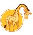 a giraffe sticker template vector image vector image