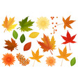 big set realistic leaves and flowers vector image vector image
