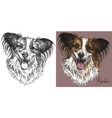 papillon dog in black and white and colorful vector image
