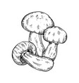porcini mushroom engraving vector image vector image