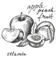 apple and peach fruit group set hand drawn vector image