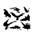 falcons vector image