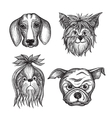 Hand Drawn Dog Faces Set vector image vector image