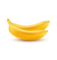 icon of bananas isolated on white in vector image