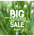 Spring sale poster vector image
