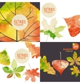 Autumnal Background Set vector image