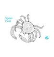 european spider crabhand-drawn vector image