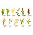 grasses cereal crops plant heap grains seeds