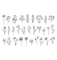 line art floral elements vector image