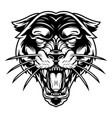 monochrome ferocious panther head vector image