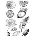 tea collection-01 vector image