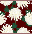 white chrysanthemum flower on red background vector image