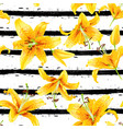 background with yellow lily flowers vector image