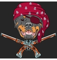 Dog Rottweiler Pirate with pistols vector image