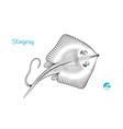 stingray hand-drawn vector image