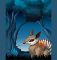 a bandicoot in dark forest vector image vector image