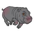 cute naturalistic hippopotamus vector image vector image