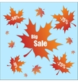Discount with leaves vector image