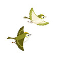 flying goldcrest pair isolated on white vector image