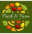 Fresh and farm fruits poster vector image vector image