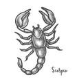 scorpion sketch or hand drawn scorpio zodiac sign vector image vector image