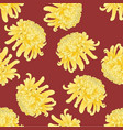 yellow chrysanthemum flower on red background vector image