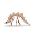 bone of stegosauras isolated on white vector image vector image