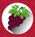 Fruits digital design vector image vector image