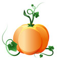 ripe pumpkin isolated on white vector image vector image