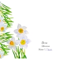 Background with Narcissuses1-04 vector image vector image