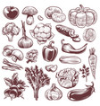hand drawn vegetables various vintage hand drawn vector image vector image