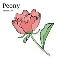 isolated peony flower design in vector image